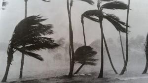 décoiffés palmiers
